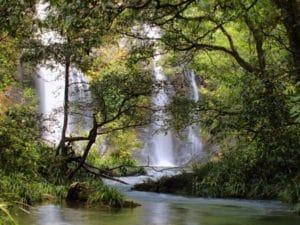 熱帯雨林など大自然を身近に感じられる