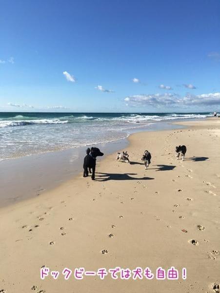ドックビーチと呼ばれる犬が遊ぶエリアがあるのもゴールドコーストのような広いビーチならでは。