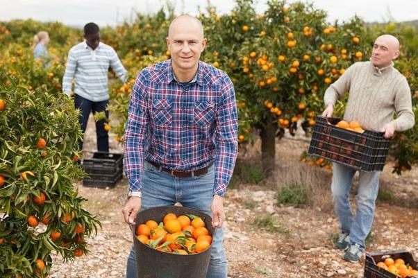 収穫物を集める作業