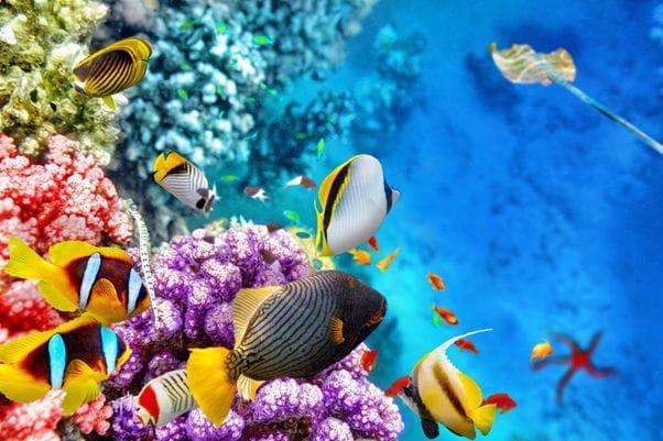 世界最大のサンゴ礁地帯