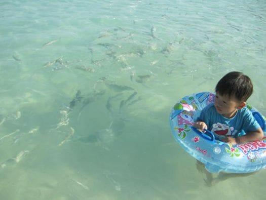波打ち際まで魚が泳いでいます。