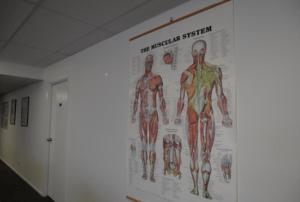 筋肉の組織図